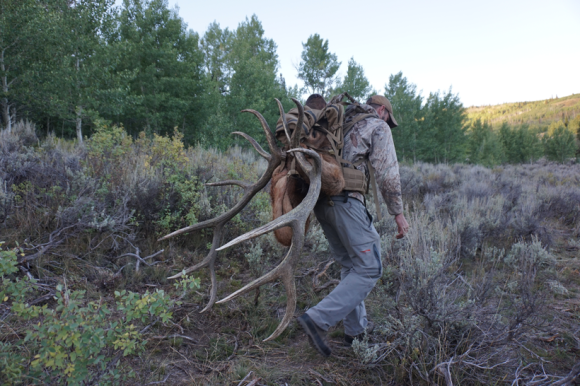 Packing-out-a-bull-elk