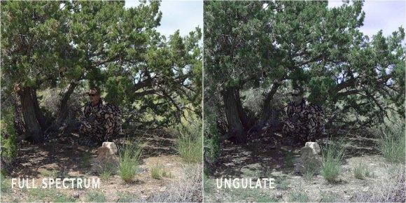 ASAT_tree