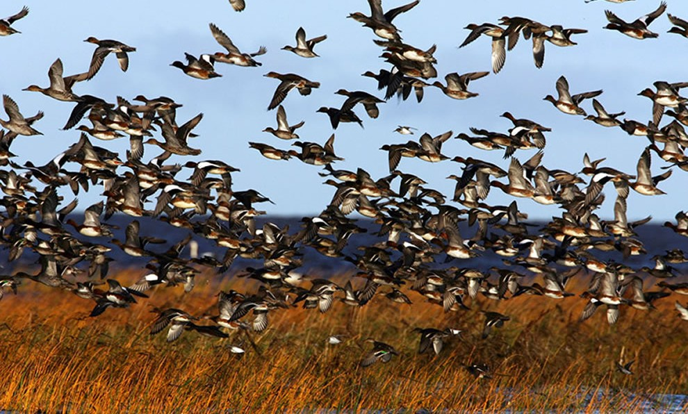 Waterfowl Workout « Hunting Fit