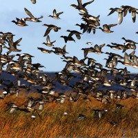 Waterfowl Workout