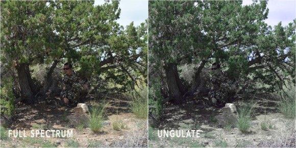 Fusion_tree