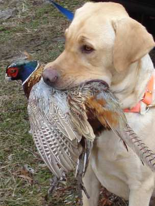 Is Your Dog Your Favorite Hunting Partner?