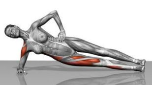 These Are The Muscles Used During Side Planks. The Primary Focus being the Obliques.