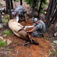 Photo courtesy of elk101.com.