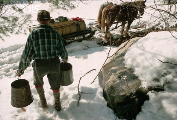 Farmer Carrying Buckets of Sap