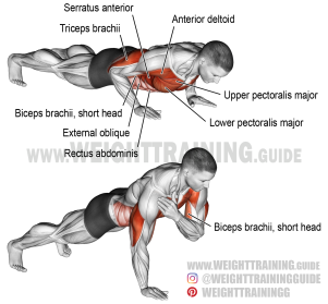 Push Ups are Great for the Core and Upper Body and Can be Done Anywhere (photo courtesy of weighttraining.guide).
